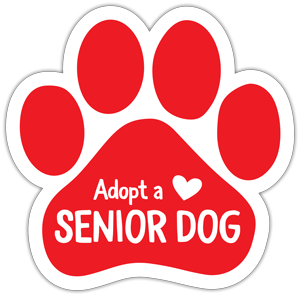 Adopt a Senior Dog thumbnail